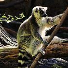Lazy Lemur by vigor