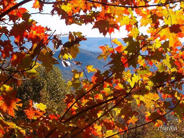 Fall in NC by rfsjraia