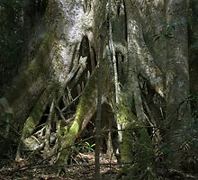 Strangler Fig by eclectic1