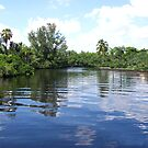 Powell Creek - North Fort Myers by Cardet