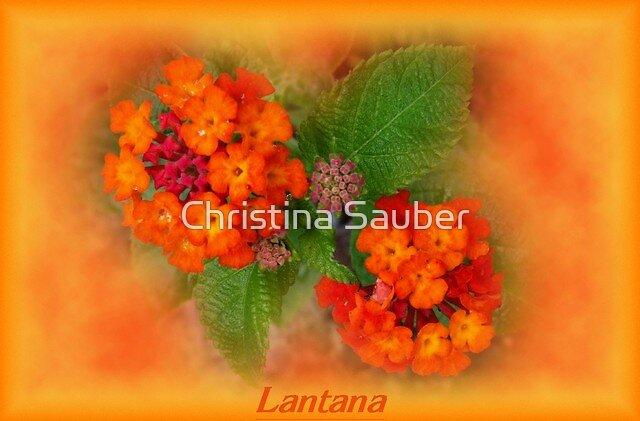 Lantana by Christina Sauber