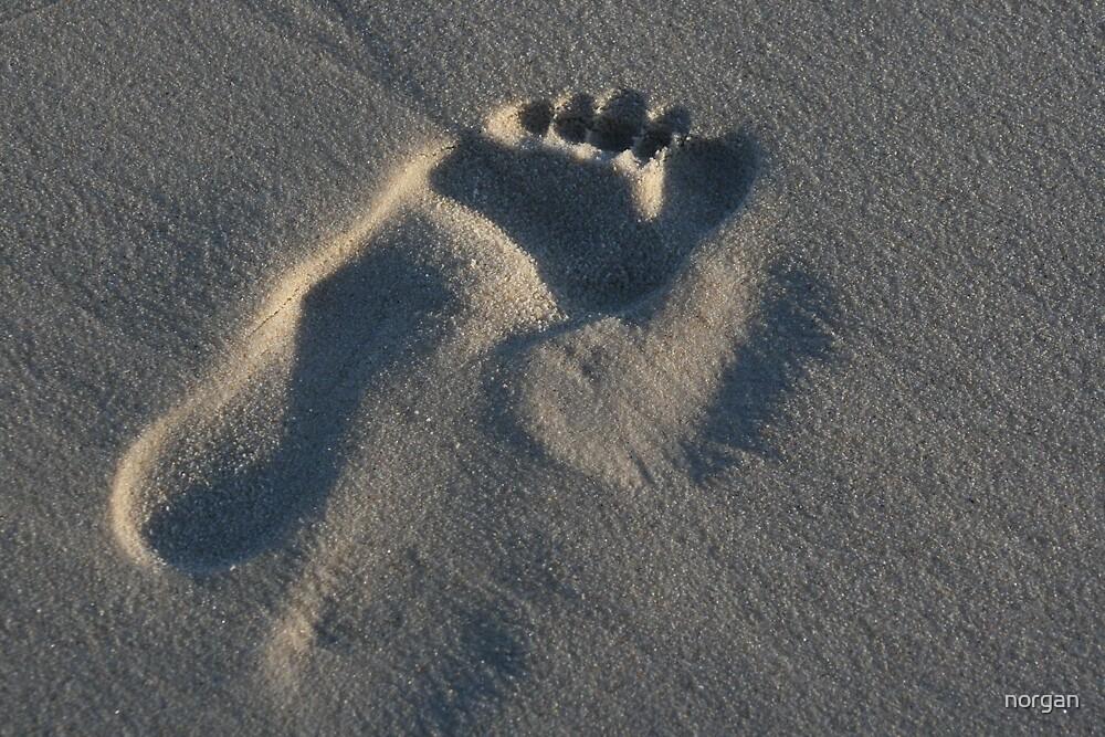 Footstep by norgan
