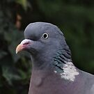 'We are NOT amused' - Wood Pigeon by Rivendell7