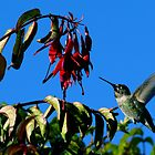 #223  Hummingbird On Fuschia  by MyInnereyeMike