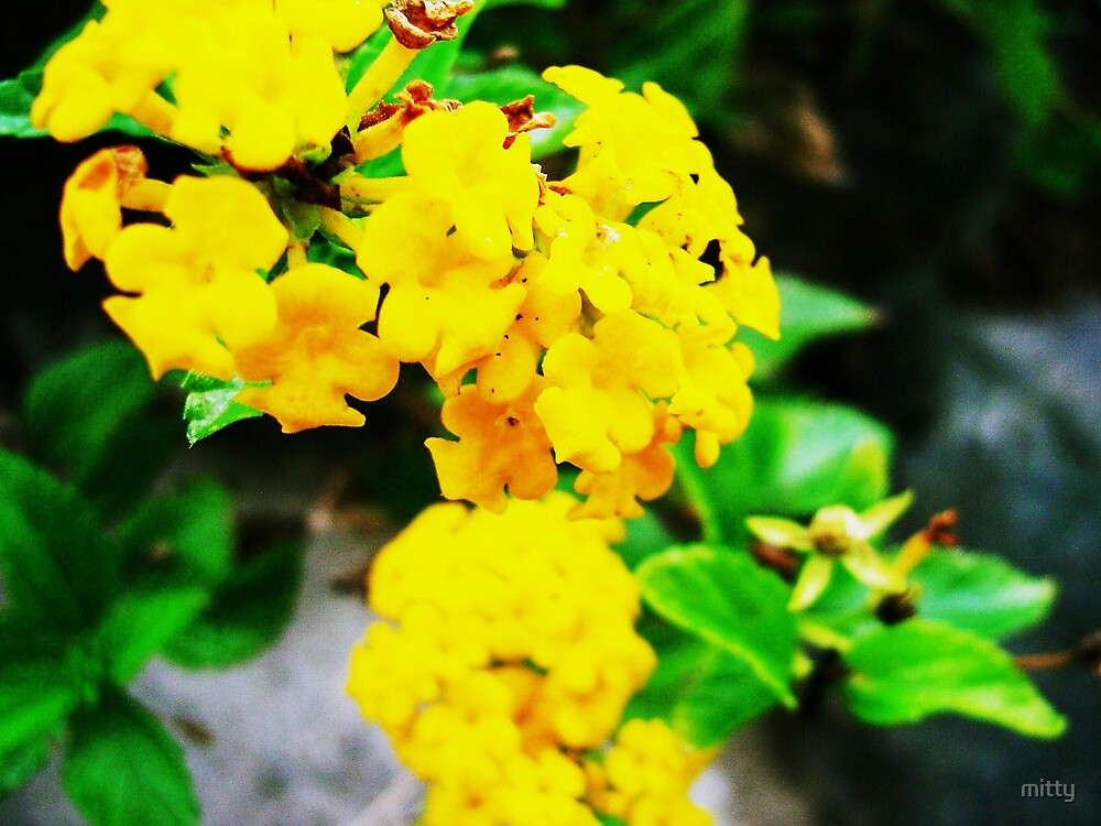 Yellow by mitty