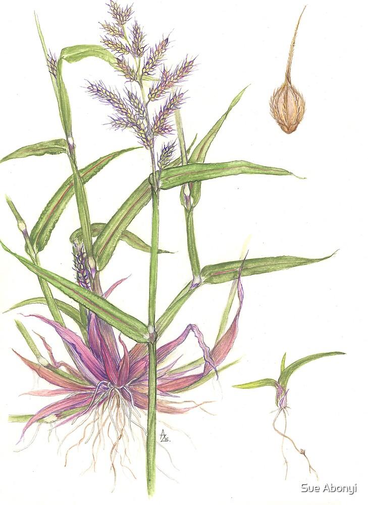 Cockspur - Echinocloa crus-galli by Sue Abonyi