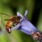 Bee by masterpiececreations