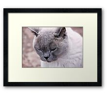 Purr-fection Framed Print