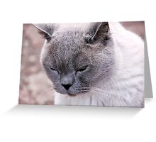 Purr-fection Greeting Card