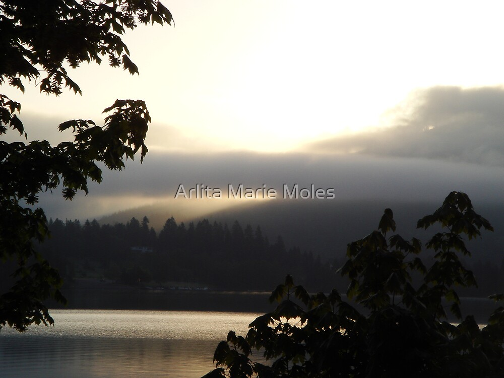 DexterSunrise by Arlita Marie Moles