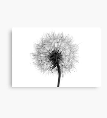 Dandelion (Reversal) Canvas Print