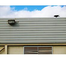 raven on roof Photographic Print