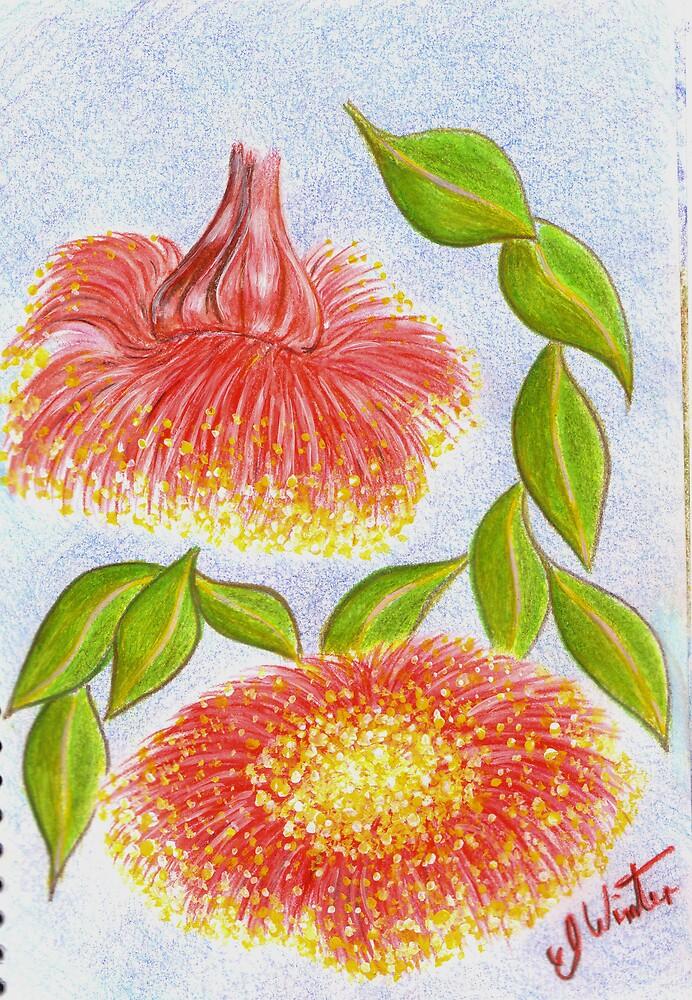 Waratah;s in bloom. by EmilyWinter