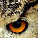 The Eye by Jacky