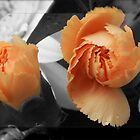 Delicate Peach by Ann Chane