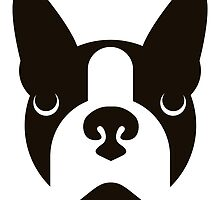 Boston Terrier  by Vlad Chichisan