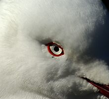 seagul eye birds eye by Robert Kiesskalt