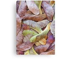 Sycamore Seeds Canvas Print