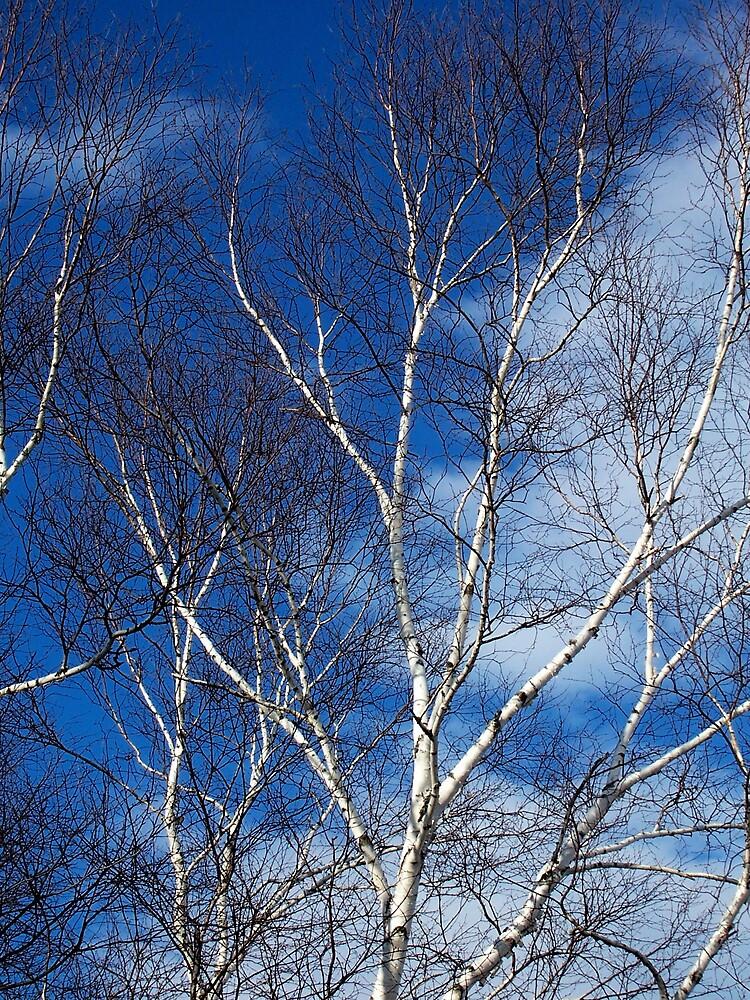 Sky Tree by Gene Cyr