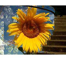 Dali Way Photographic Print