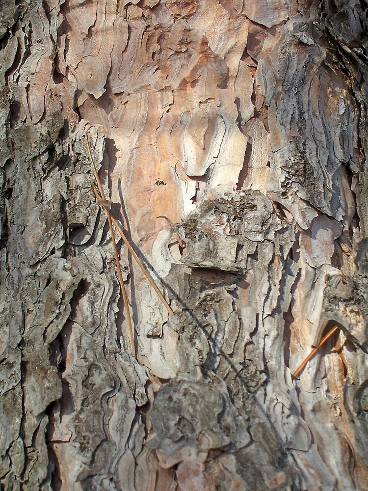 Tree Bark 3 by Gene Cyr