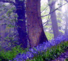 Bluebells in the Forest Rain Sticker