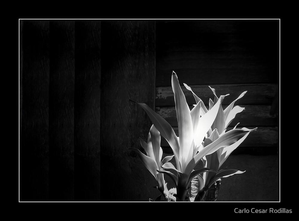 My Bright Fortune by Carlo Cesar Rodillas