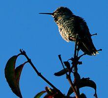 #236  Hummingbird Perched On Fuschia  by MyInnereyeMike