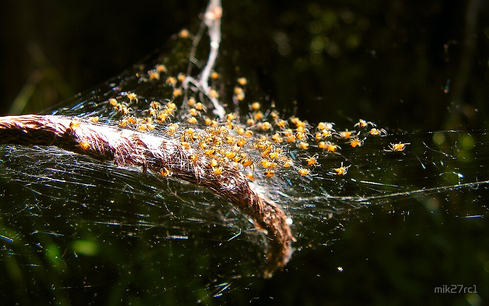 spiders nest by mik27rc1