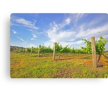 jane brook wines Canvas Print