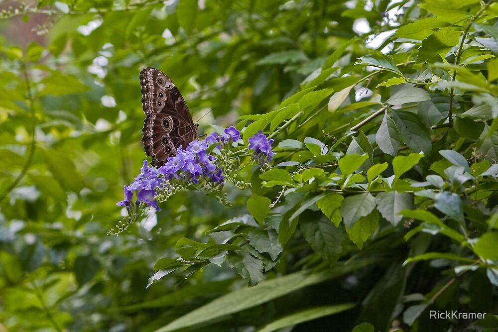 Butterfly 2 by RickKramer