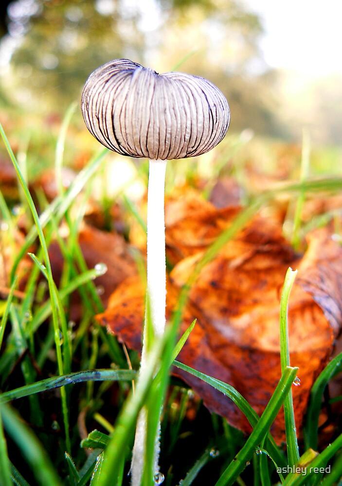 mushroom by ashley reed