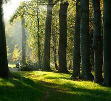 Sunrays in autumn wood by Sjouke Veenbaas
