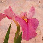 Pink Elegance by Susan Werby