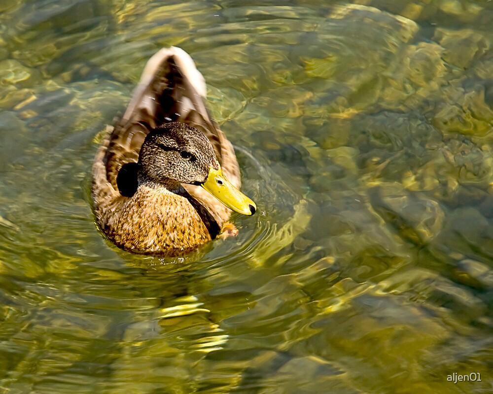 Swimming Duck by aljen01