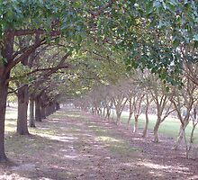 walk the loney path... by batgirl757