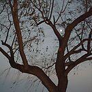 dusk by batgirl757