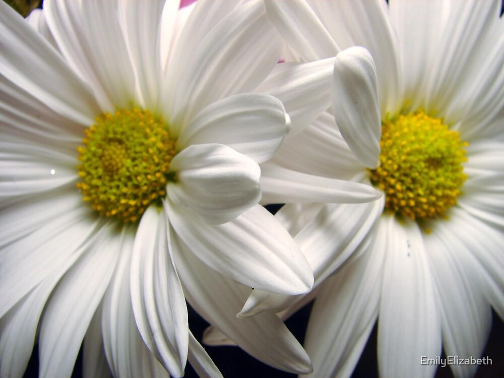 Daisies by EmilyElizabeth