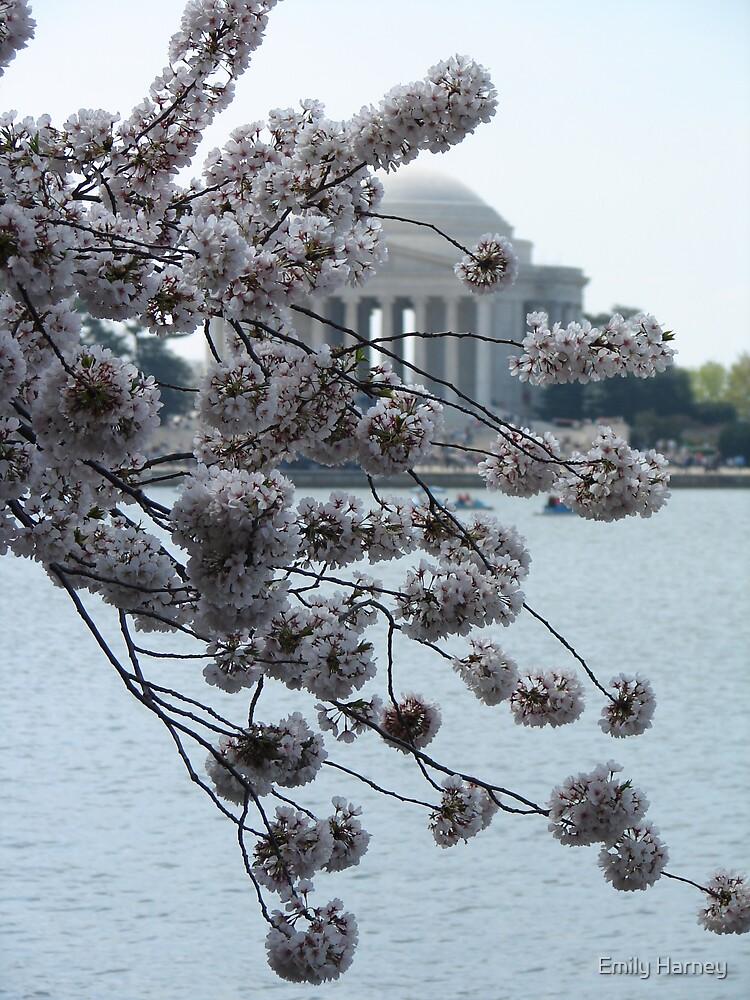 Cherry Blossom by Emily Harney