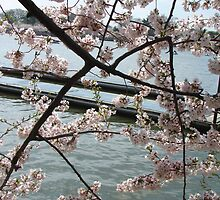 Cherry Tree by Emily Harney