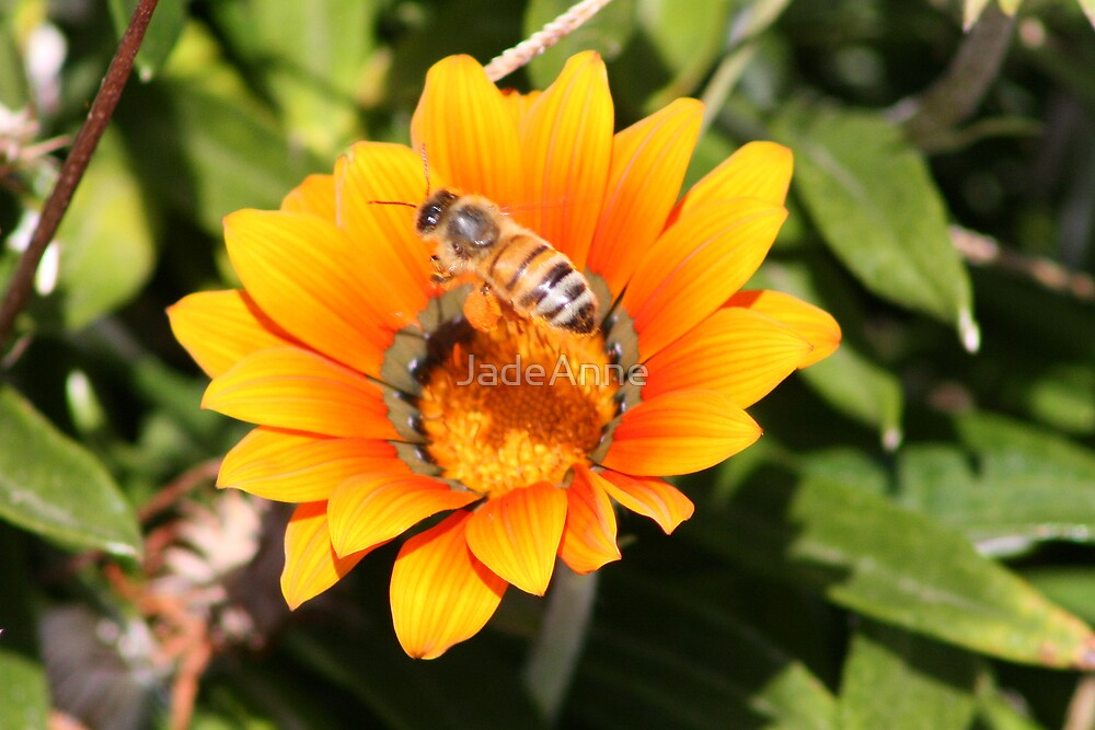 Busy Bee by JadeAnne
