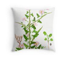 Perennial Morning Glory - Convolvulus arvensis Throw Pillow