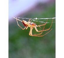 Creepy Crawly Photographic Print