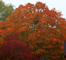 Fall colors by Karl Rose