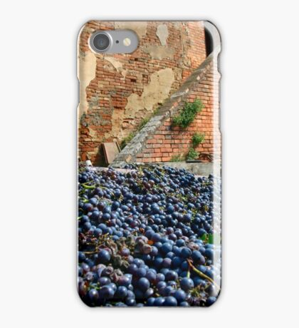 Grape harvest iPhone Case/Skin