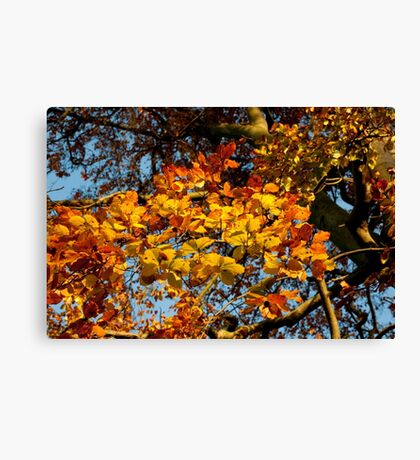 Autumn Cascade of Beautiful Leaves Canvas Print