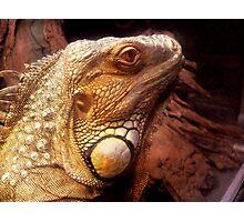 Iguana Photographic Print