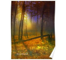 Evening Mist in the Woods Poster