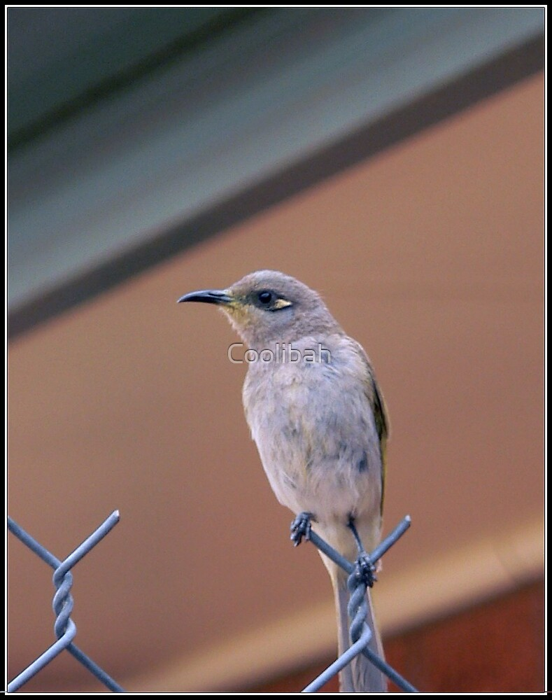 Bird on a wire  by Ruth Anne  Stevens