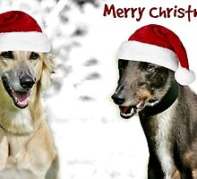 Greetings from the Greyhounds by Ladymoose
